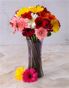 gifts: Mixed Gerberas in a Purple vase!