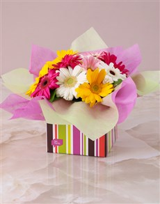 flowers: Mixed Mini Gerberas in a Stripe Box!
