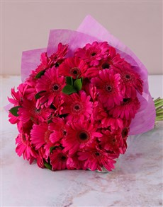 flowers: Cerise Pink Gerberas in a Bouquet!