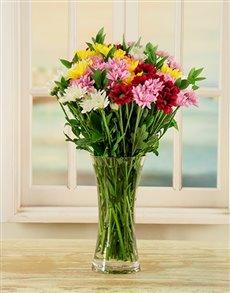 flowers: Mixed Daisy Vase!