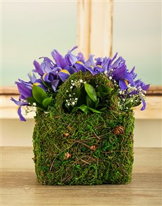 flowers: Iris Moss Basket!
