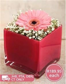 flowers: Precious Pink Star Vase!