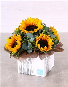 flowers: Striking Sunflower Box!