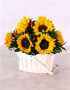 flowers: Sunflowers in White Wash Basket!