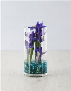 flowers: Mystical Iris in a Vase!