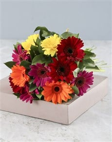 flowers: Glorious Gerberas!