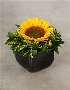 flowers: Green Button Sunflower in Glazed Vase!