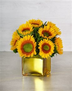 flowers: Green Button Sunflowers in Gold Vase!