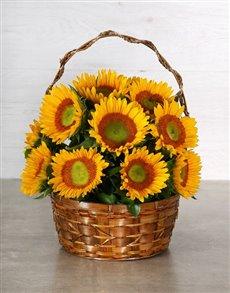 flowers: Green Button Sunflower Basket!
