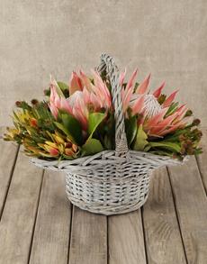 flowers: King Protea & Greens Basket!