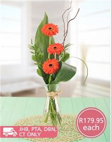 flowers: Small Stepped Orange Gerbera Display!
