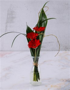 flowers: Stepped Red Gerberas!