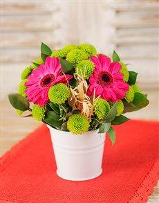 flowers: Pail of Gerberas Petite!