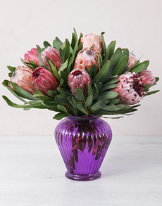 flowers: Mixed Proteas in Purple Lantern Vase!