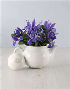 flowers: Irises in a Teapot!