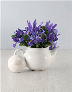 flowers: Irises in a Teapot!