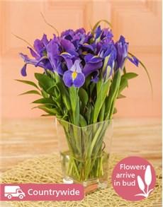 flowers: Irises in a Vase!