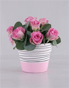 flowers: Pretty in Pink Roses!