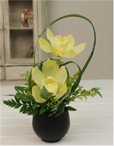 plants: Cymbidium Orchid in a Mini Vase!