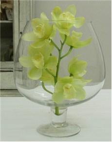 plants: Cymbidium Orchid in Brandy Glass Vase!