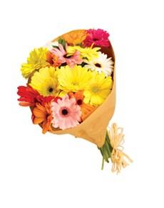 flowers: Limited Mini Gerbera Upsize Special!