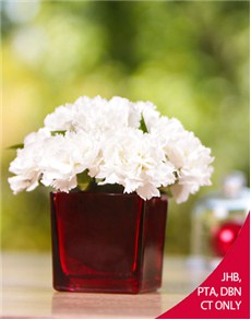flowers: White Carnations in a Red Vase!
