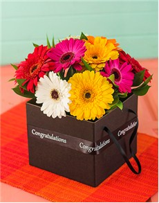 flowers: Congratulations Mini Gerbera Box!