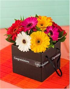 flowers: Congratulations Mini Gerbera Box!