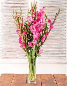 flowers: Pink Gladiolus in a Glass Vase!