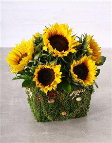 flowers: Mystical Sunflower Moss Basket!