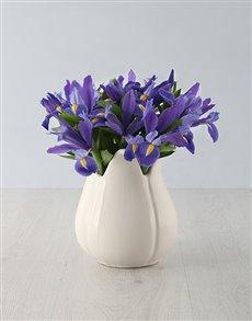 flowers: Irises in a Ceramic Vase!
