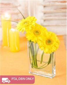 flowers: Gerbera's in Tank Vase!