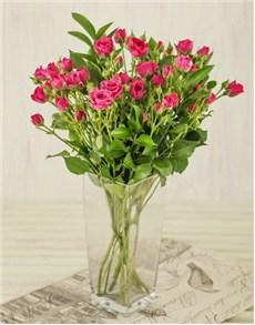 flowers: Kenyan Cluster Cerise Roses in Vase!
