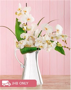 plants: Cut Orchid in Aluminium Jug!