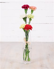 Flowers: Simply Six Mixed Carnations!