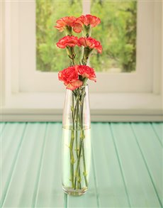 flowers: Simply Six Orange Carnations!