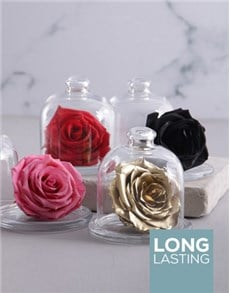 flowers: Large Glass Dome Containing A Preserved Rose!