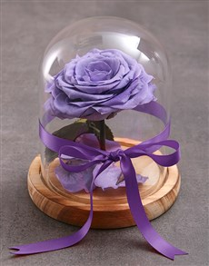 flowers: Tale As Old As Time Preserved Lilac Rose!