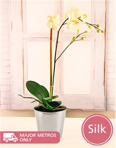 flowers: Silk Phalaenopsis Orchid in Silver Tin!