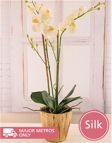 flowers: 2 Stem Silk Phalaenopsis Orchid in a Pot!