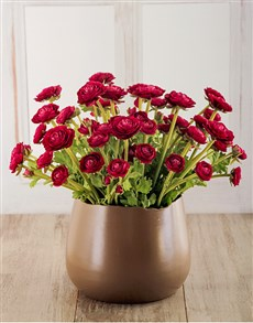 flowers: Wine Rananculus in Pottery Container!