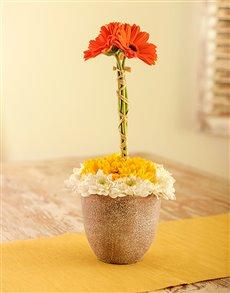 flowers: Gerbera Topiary!