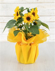 flowers: Magical Sunflower Pot!
