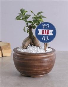 gifts: Best Dad Bonsai!