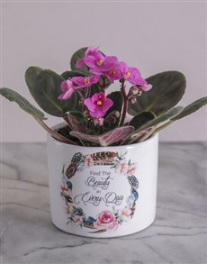 plants: Beauty in Every Day African Violet!