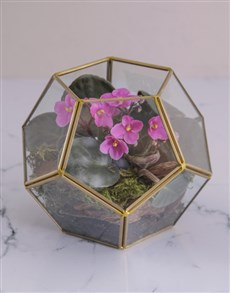 plants: Glamorous African Violet Terrarium!