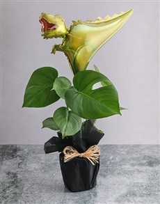 flowers: Monsteria With Trex Balloon!