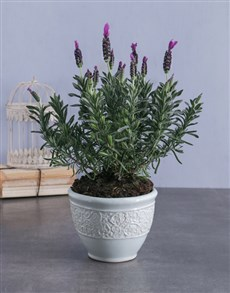 flowers: Lavender in French Ceramic Pot!