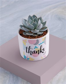flowers: Thanks Succulent In White Ceramic Pot!