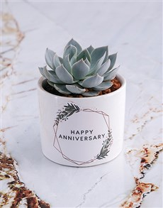 flowers: Happy Anniversary Succulent In White Ceramic Pot!